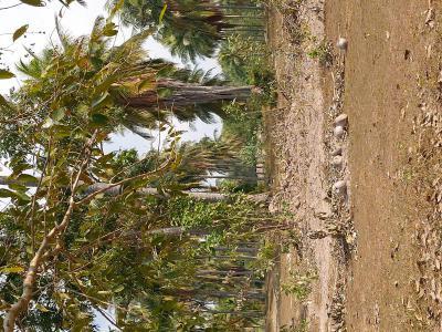 ที่ดิน 1320000 ประจวบคีรีขันธ์ เมืองประจวบคีรีขันธ์ ห้วยทราย